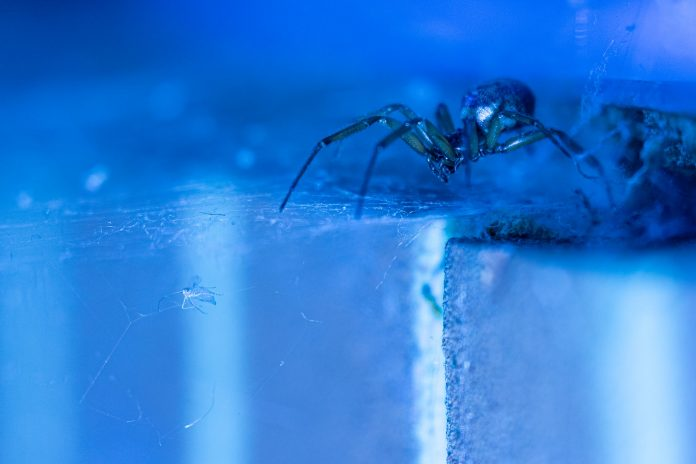 A Guide to the Dangerous Spiders